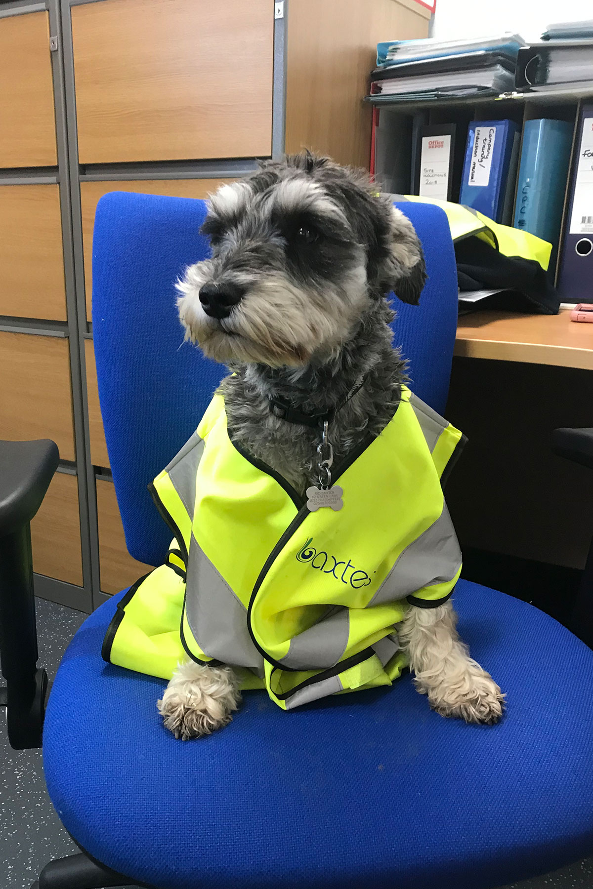 Sid the security dog